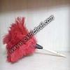 ostrichos : 1008
